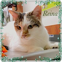 Adopt A Pet :: Reina - Flushing, NY