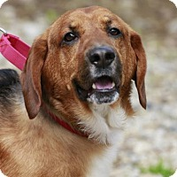 Adopt A Pet :: Luther - Kettering, OH