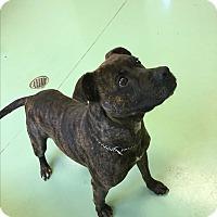Adopt A Pet :: Gunner - Gadsden, AL