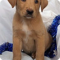 Adopt A Pet :: Charlie - Mooresville, NC