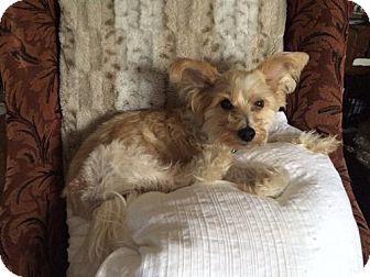 Chinese Crested Dog for adoption in Richardson, Texas - Leonardo