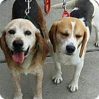 Adopt A Pet :: Princess - Rexford, NY