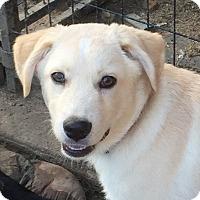Adopt A Pet :: Fletcher - McKinney, TX