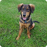 Adopt A Pet :: Rosco - New Oxford, PA
