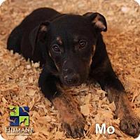 Adopt A Pet :: Mo - Ringwood, NJ
