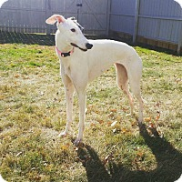 Adopt A Pet :: Edgewood - Glastonbury, CT