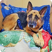 Adopt A Pet :: Baby Girl - Kingston, TN