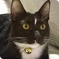 Adopt A Pet :: Freja - Orlando, FL