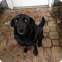 Adopt A Pet :: BB -smart girl looking for a loving home - Bainbridge Island, WA
