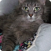 Adopt A Pet :: maude - Muskegon, MI