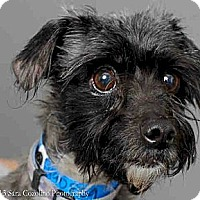 Adopt A Pet :: Monte - Long Beach, CA