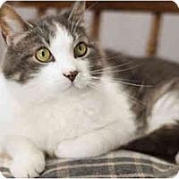Adopt A Pet :: Minucho - Markham, ON