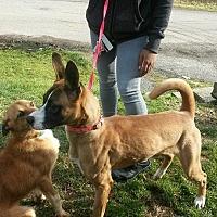 Boxer Mix Dog for adoption in Prestonsburg, Kentucky - layla