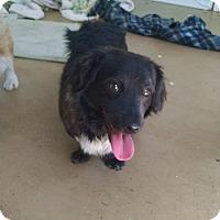 Adopt A Pet :: Dean - Simi Valley, CA