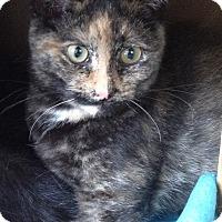 Adopt A Pet :: Leila - Island Park, NY