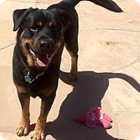 Adopt A Pet :: Wolfie - Gilbert, AZ
