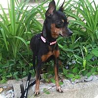 Adopt A Pet :: Penny - Bridgewater, NJ
