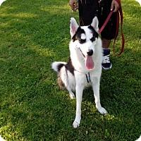 Adopt A Pet :: Mia - Northumberland, ON