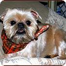 Adopt A Pet :: ARKANSAS VOLUNTEERS NEEDED!