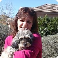 Adopt A Pet :: Riley fka Rumaki - Phoenix, AZ