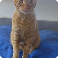 Adopt A Pet :: Candy - Manning, SC