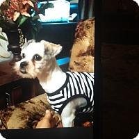 Adopt A Pet :: Fancy - springtown, TX