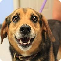 Adopt A Pet :: Ella - Martinsville, IN