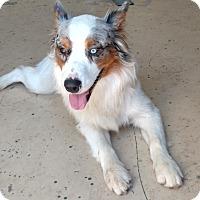 Adopt A Pet :: Pogo - Albuquerque, NM