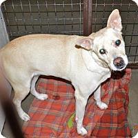 Adopt A Pet :: Gabby - San Jacinto, CA