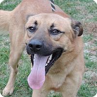 Adopt A Pet :: BRONCO - Sioux City, IA