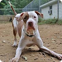 Adopt A Pet :: Leon - North Haledon, NJ