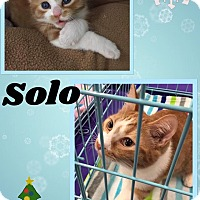 Adopt A Pet :: Solo - Mansfield, TX