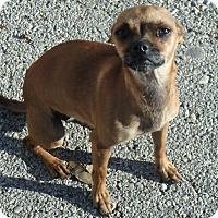 Adopt A Pet :: Tia - Seguin, TX
