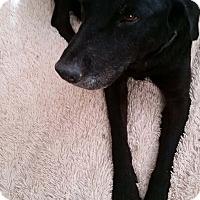 Adopt A Pet :: Eva - Phoenix, AZ
