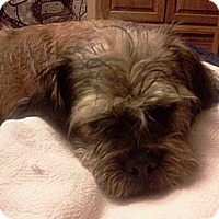 Adopt A Pet :: Sandy - Glastonbury, CT
