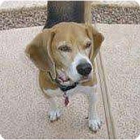 Adopt A Pet :: Houdini - Phoenix, AZ