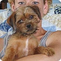 Adopt A Pet :: Oscar - Salem, NH