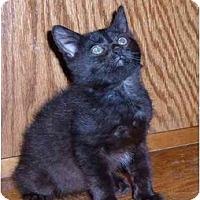 Adopt A Pet :: Sabrina - Bedford, MA