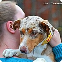 Adopt A Pet :: Emily - PENDING, in Maine - kennebunkport, ME