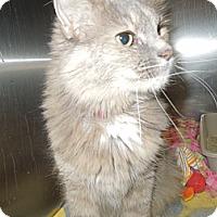 Adopt A Pet :: Skylar - Medina, OH
