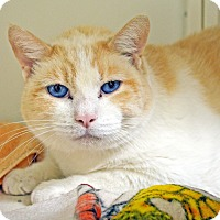 Adopt A Pet :: Rusty - Lincoln, NE