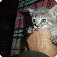 Adopt A Pet :: Lenny - Mundelein, IL