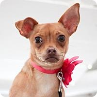 Adopt A Pet :: Deanna - Oakland, CA