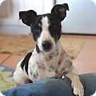 Adopt A Pet :: Bartolo