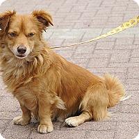 Adopt A Pet :: Reggie - Redondo Beach, CA