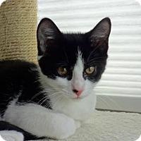 Adopt A Pet :: Annabelle - Colmar, PA