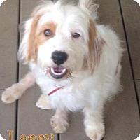 Adopt A Pet :: Bordentown NJ - Larry - New Jersey, NJ