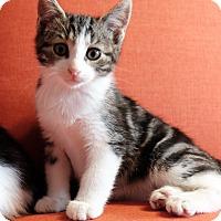 Adopt A Pet :: Ian - Brooklyn, NY