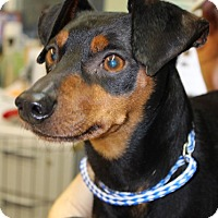 Adopt A Pet :: Bo - Grants Pass, OR