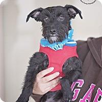 Adopt A Pet :: Astro - Kingwood, TX